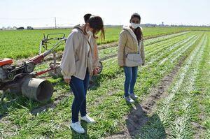 麦踏みを体験するネパール人の留学生ゴンバ・ルパさん(手前)とパラズリ・スニタさん=佐賀市川副町の麦畑