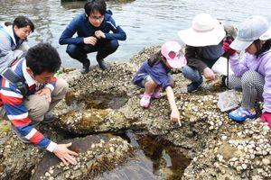 岩場にいる生き物を観察する参加者たち=唐津市呼子町の弁天島周辺