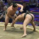 大相撲、朝玉勢と魁勝が新十両