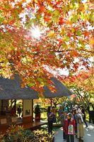 紅葉した木々と邸宅が美しい景観を描き出す九年庵=15日午前、神埼市神埼町(撮影・米倉義房)