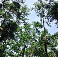 空、海、風、木々の香り…東京から唐津を思う