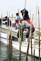 モウソウダケを海底に突き刺し、仕掛けを準備する吉田さんら=4日、広江漁港から30分ほどの有明海沖