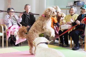 ボールを上手にキャッチしたイヌに拍手する参加者=佐賀市久保泉町のデイサービスSOLA