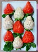 高級「白イチゴ」 唐津で50キロ盗難