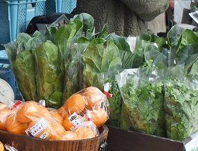 暖冬で野菜値下がり 佐賀県内の農家も悲鳴