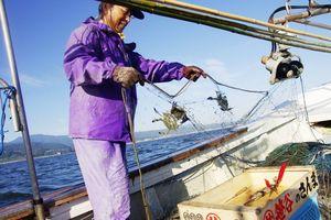 船をゆっくり走らせながら網を引き揚げる「がね網漁」