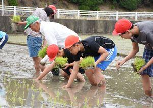 大嘗祭に納める「夢しずく」を丁寧に手植えする児童たち=基山町の基山小学習田