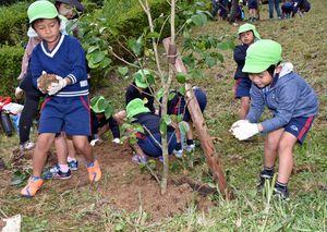土を手で運んでツバキの根元に優しくかける園児たち=上峰町の鎮西山