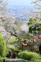 <桜めぐり2019>朝日山(鳥栖市) 桜と町並み一望