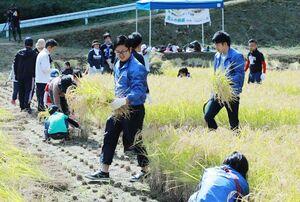 「すみやま棚田守る会」の交流イベントで稲刈りをする参加者=伊万里市二里町炭山地区(提供写真)