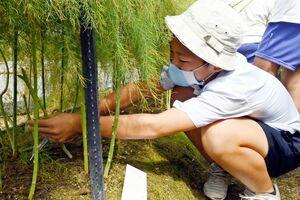 アスパラガスの収穫を楽しむ児童たち=佐賀市本庄町のハウス