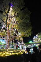 光のツリーをカメラにおさめる学生たち=唐津市のJR唐津駅北口