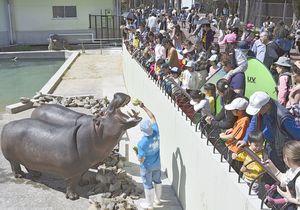 親子連れなど多くの入場者でにぎわう熊本市動植物園のカバ舎前=4月6日、同市東区