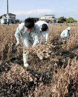 県産大豆の収量アップに向けて、試験圃場で栽培技術の検証を進める県やJAの関係者=佐賀市西与賀町(2016年11月)