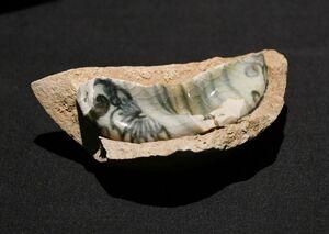 武雄市の宇土谷(うどんたに)窯跡から出土した、さや鉢に熔着した磁器片(1610~30年代)