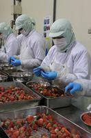 冷凍用イチゴのヘタを取る従業員(JAさが提供)