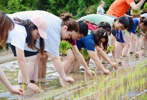 はだしになって棚田で田植えをする留学生たち=有田町岳地区