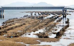 黒瀬川河口付近に設置されたカキの養殖に使われる棚。倒壊や土砂の堆積が目立つ=1日、広島県呉市