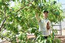 白石町、果樹生産へ着々 「山間部から新たな特産品を」