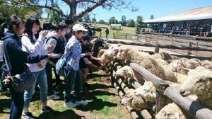 修学旅行先はオーストラリア。海外で人や動物とも(?)国際交流を楽しんだ
