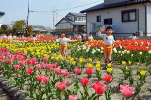開化した約5千本のチューリップ畑の中で歌やお遊戯を披露する園児たち=佐賀市諸富町