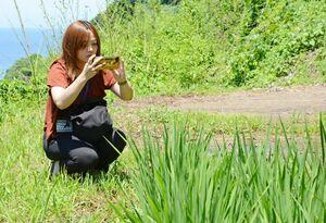 浜野浦の棚田のPRのために、SNSに投稿する写真を撮影する国重亜樹奈さん=浜野浦の棚田