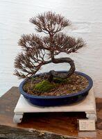 盆栽を再現した作品「松」