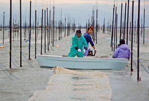 ノリ網を張り込む漁業者=佐賀県沖の有明海