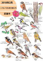 2018年2月 いろいろな冬の鳥たち