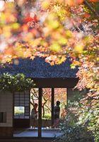 木々が鮮やかに紅葉し、訪れた人たちを魅了している九年庵=神埼市神埼町