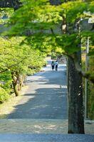 国名勝「九年庵」と仁比山神社に続く参道。一般公開の時期には歩行者天国となるが、今年は人影もほとんどない=29日午後4時ごろ、神埼市の仁比山神社