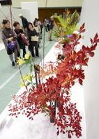 前回開催された佐賀県諸流合同いけばな展=2014年、佐賀市の市村記念体育館