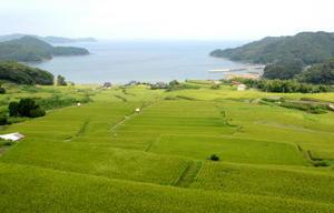 向島などが間近に見える駄竹の海。近年は「磯焼け」など海況異変も
