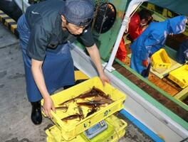 船から運ばれるスルメイカ=2日午前、北海道函館市