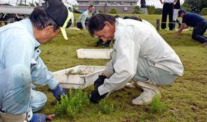 汗をぬぐいながら草刈りをする参加者たち=佐賀市の佐賀城公園