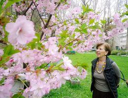 外務省の庭でも植樹した桜が咲き誇っていた。イピル・イピルの会現地スタッフのヴァイカさんも笑顔を浮かべた=サラエボ