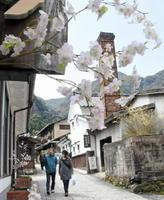 窯元散策を楽しみながら掘り出し物を探す大川内山「桜まつり」。桜の開花が遅れたが、各店の軒先に造花を飾るなどしてもてなした=伊万里市大川内町