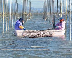 ノリの冷凍網を張り込む漁業者=佐賀県沖の有明海