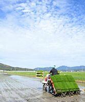 晴天の下、白石平野で始まった超早場米七夕コシヒカリの田植え=白石町須古