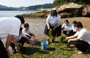 学校裏手の海辺でアオサを収集する環境部の部員たち
