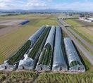 ナシ落果など農作物に被害、台風7号通過