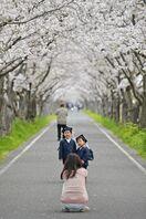 <桜だより>桜、変わらぬ美しさ 佐賀県内の名所