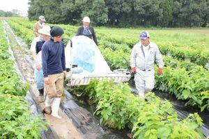 茶摘み機で桑の葉を刈り取る「神埼和桑(わぐわ)部会」の会員ら=神埼市神埼町の尾崎地区