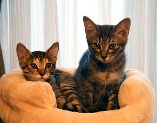 他人の猫虐待、求刑より重い判決