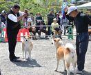 佐賀市で秋田犬の容姿競う展覧会