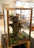 ショールームで話題になっている展示されたカブトムシ=佐賀市諸富町のレグナテック
