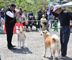 審査を受ける秋田犬と飼い主たち=佐賀市の道の駅大和そよかぜ館