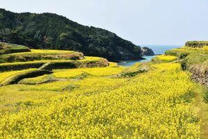 散策コースの一つ「田ん中コース」から見た景色。今の時期は菜の花が見頃