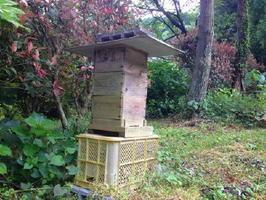 庭にあるミツバチの巣箱