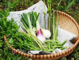 少しずつ増えていく季節の野菜たち